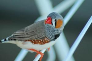 bokeh sur un oiseau