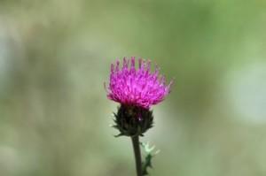 fleur bokeh vert
