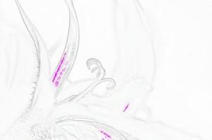 aquarelle etape 2